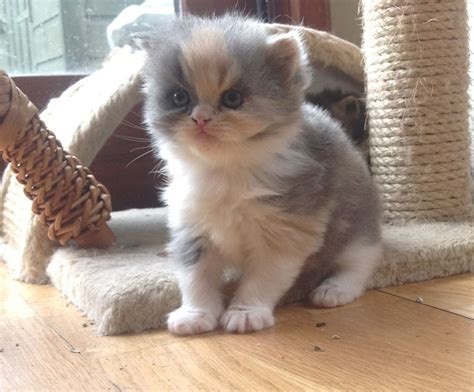 Kittens For Sale by Kittens For Sale Northton