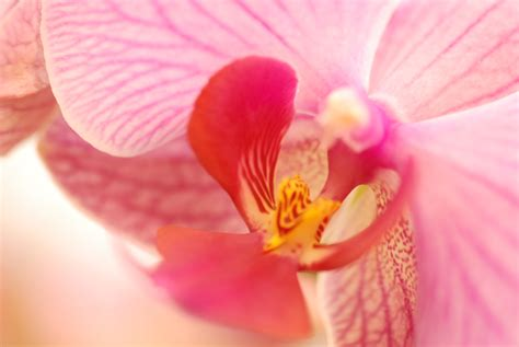 how to make an orchid rebloom tips to help your orchids rebloom flower pressflower press