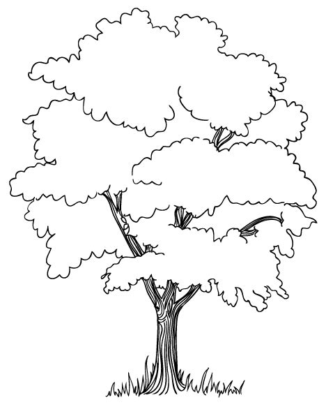 trees to color free coloring pages of tree roots