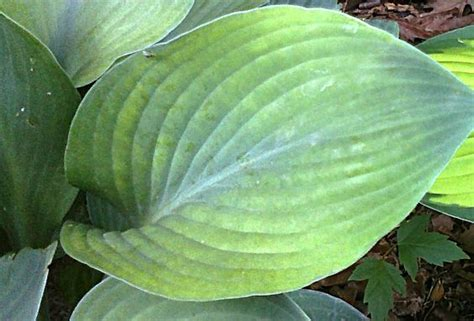 large leaf the world s catalog of ideas