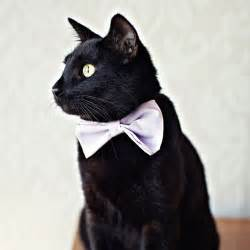 cat bow tie rover cat bow tie