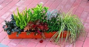 Winterharte Pflanzen Für Balkonkästen : balkonpflanzen set f r balkonk sten 80 cm lang pflanzen versand f r die besten winterharten ~ Orissabook.com Haus und Dekorationen