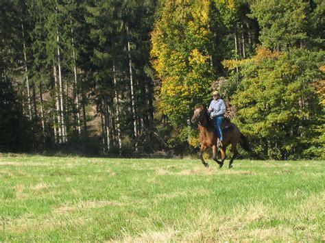 neues pferd  ist zu tun kaufvertrag und equidenpass