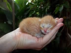 15 sized baby animals part 2