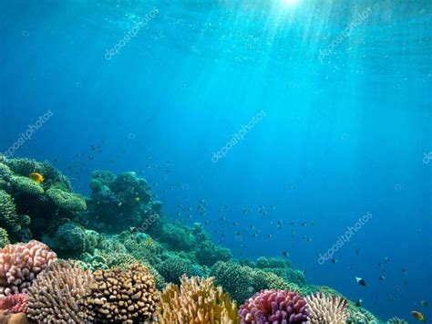 underwater ocean floor art backgrounds  powerpoint