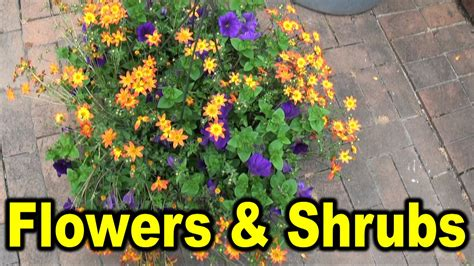 name of shrub flowering shrubs with names www pixshark com images galleries with a bite