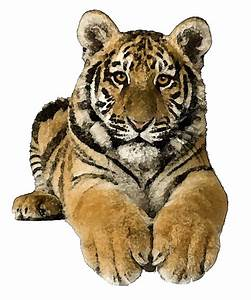 Tiger Transparent Clipart - Clipart Suggest