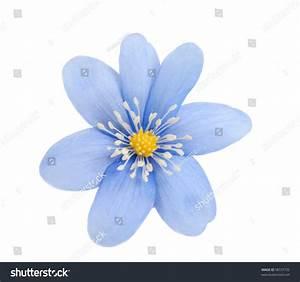 Blue Flower Isolated On White Background Stock Photo ...