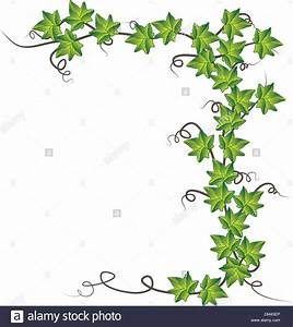 Green ivy . Vector illustration Stock Vector Art ...