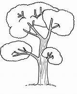 Coloring Tree Pages Palm Drawing Trees Colour Cartoon Zentangle Printable Coconut Getcolorings Tall Getdrawings Popular Anycoloring sketch template