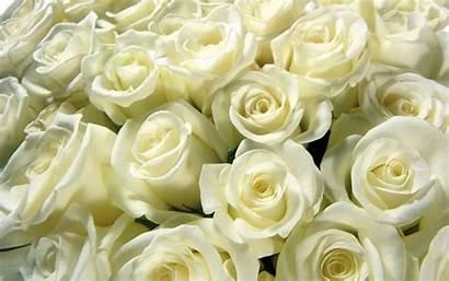 Flowers Roses Wallpoper Rose