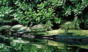 Schimmel In Pflanzen : milben und schimmel im terrarium ~ Bigdaddyawards.com Haus und Dekorationen