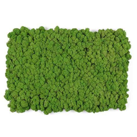 Living Wall Reindeer Moss Tile Green 16x24   Mineral Tiles