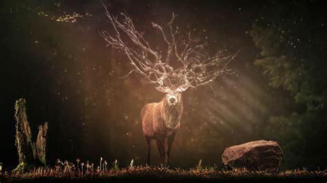 wallpaper deer hirsch forest sunlight   animals