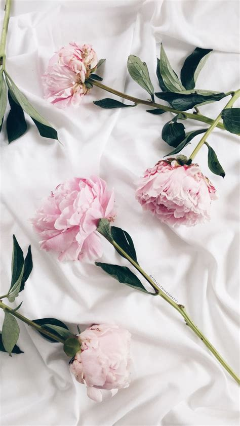 rose wallpaper ideas  pinterest tumblr