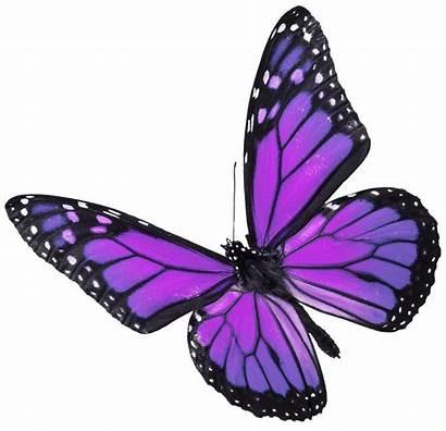 Butterfly Butterflies Purple Transparent Monarch Clipart Borboleta