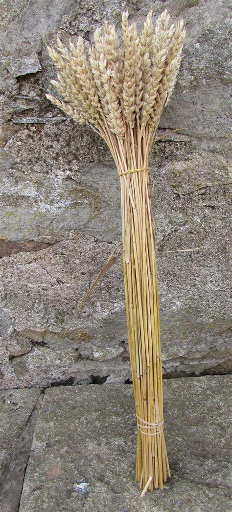 Straw Bundle (Pack of 3) - Something Corny