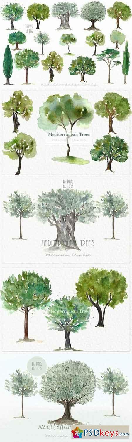 mediterranean plants and trees image gallery mediterranean trees