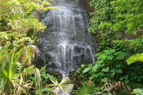 beautyful colorful garden with waterfall on a tropical