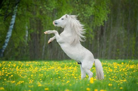 hekla lava hilft pferden bei ueberbeinen und spat expertode