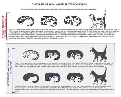 How Bicolours Develop White Cats And Cat
