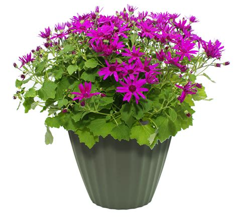 flower in pot png