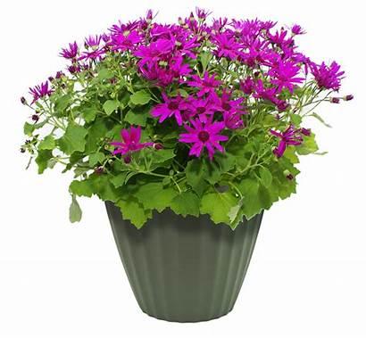 Pot Flower Transparent Plant Flowerpot Clipart Garden
