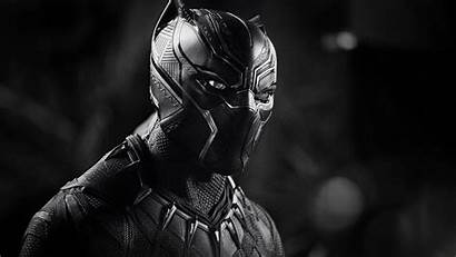 Panther 4k Monochrome Wallpapers Movies Backgrounds 2819