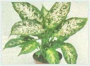 Schädlinge Zimmerpflanzen Klebrige Blätter : krankheiten und sch dlinge zimmerpflanzen foto ~ Lizthompson.info Haus und Dekorationen
