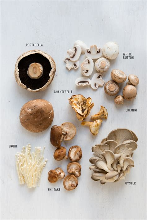 types of mushrooms a guide to mushrooms