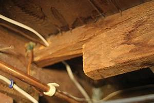 Fixing a damaged floor joist extreme how to for Notching a floor joist