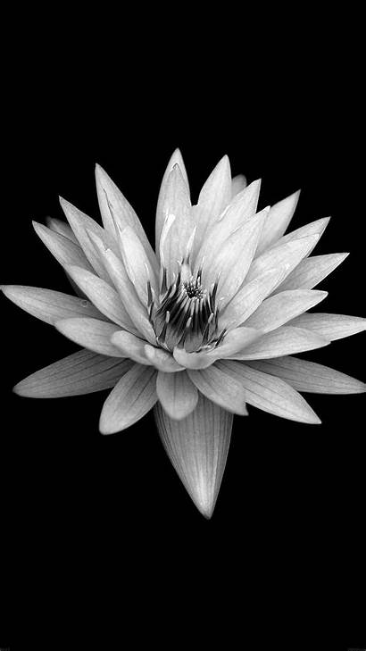 Iphone Flower Background Dark Plus Xperia Papers