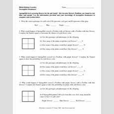Incomplete Dominance 6th  8th Grade Worksheet  Lesson Planet