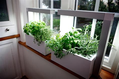 Herb Garden Indoor : How To Grow An Indoor Herb Garden-farm And Dairy