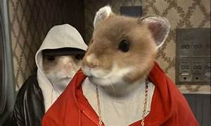 Kia Hamsters Hijacked Their Music From Web Account  Says