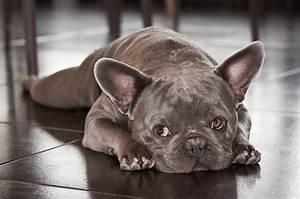 Hundebekleidung Französische Bulldogge : franz sische bulldogge welpen kaufen verkaufen ~ Frokenaadalensverden.com Haus und Dekorationen