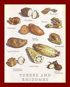 Tubers and Rhizomes | vegetables, sides | Pinterest