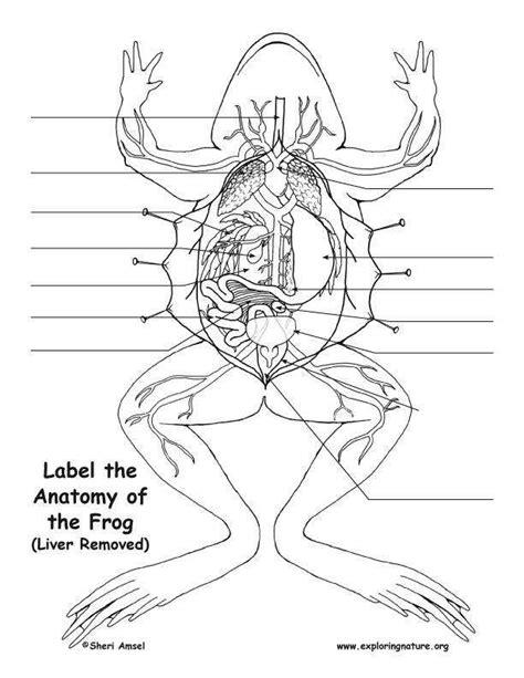 Frog Dissection Worksheet Homeschooldressagecom