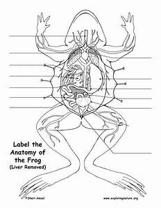 33 Frog Dissection Worksheet Answer