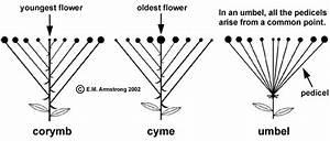 Inflorescence Terminology  Part 1