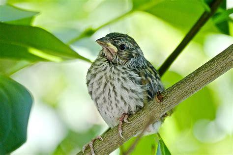 Baby Sparrow Shutterbug