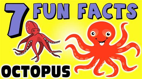 7 facts about the octopus facts for squid 593 | maxresdefault