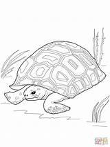 Drawing Tortoise Coloring Turtle Gopher Snapping Printable Outline Cartoon Line Drawings Alligator Adult Mandala Ausmalbilder Schildkröte Supercoloring Painted Frozen Getcolorings sketch template