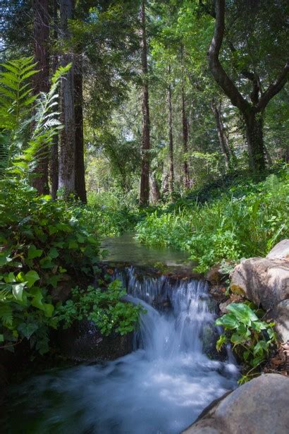small waterfall  forest  stock photo public domain