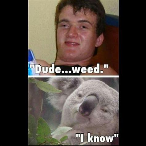 High Koala Meme - meme meme koalas and weed on pinterest