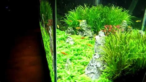 finnex fugeray planted aquarium led light plus moonlights aquarium plants for sale