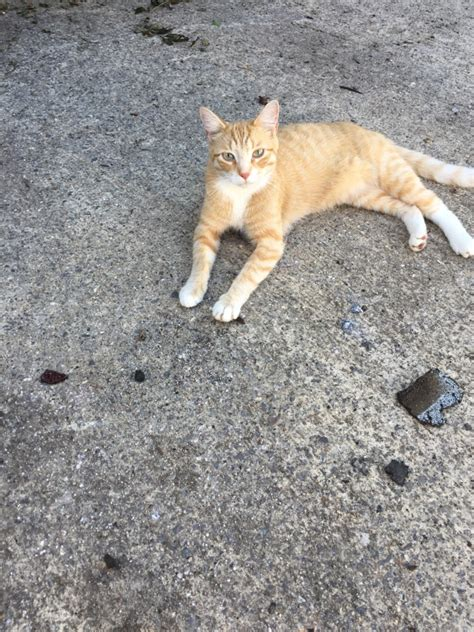 lost cat waterbury connecticut monte