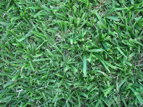 Grass Factory & Eco Organics