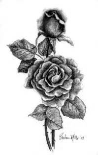Pencil Drawings Roses and Thorns