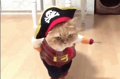 Pirate Cat Plank Booty Walks Via Brightens